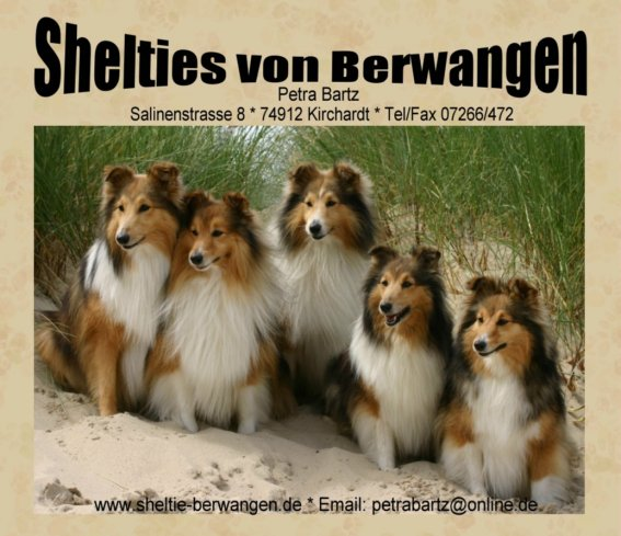 Dog Show In Shetland